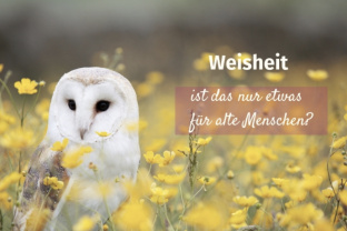 Weisheit<div class='url' style='display:none;'>/kg/grossaffoltern/</div><div class='dom' style='display:none;'>kirchenregion-aarberg.ch/</div><div class='aid' style='display:none;'>1163</div><div class='bid' style='display:none;'>15099</div><div class='usr' style='display:none;'>157</div>